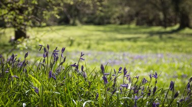 18-250mm lens, f5, 1/250 sec, ISO 100 - Bluebells in the shade and in the sun - the forest is magical.