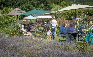 New Forest Lavender Tea Rooms, 28-300mm lens. ISO 200, Lavender and Wild flowers