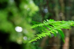 The Fern, ISO 1600, F6.3, 1/60 sec - love the vibrant colours after rain.