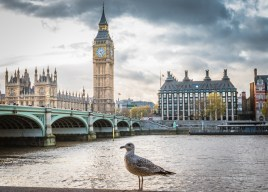 A bids eye view of Big Ben