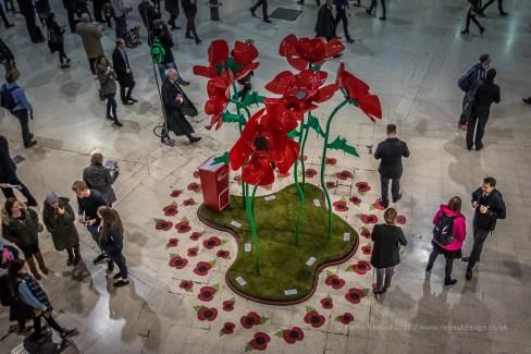 Poppies at Waterloo