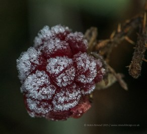 Frozen Berries, ISO1600, F8, 1/200sec