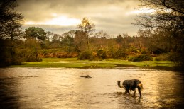 2 / 366 - A walk in the New Forest with my Border Collie