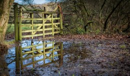 9 / 366 - Roydon Woods in Lymington after the rain - a lovely reflection