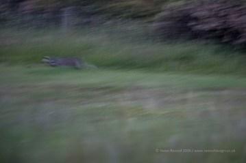 First Badger :)