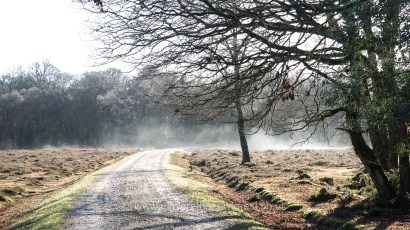 Misty morning in the New Forest