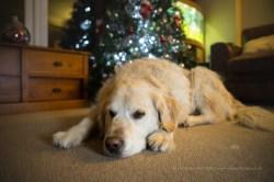 Off Camera Flash and Christmas