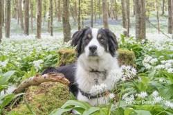 An amazing garlic wood and the photobuddy