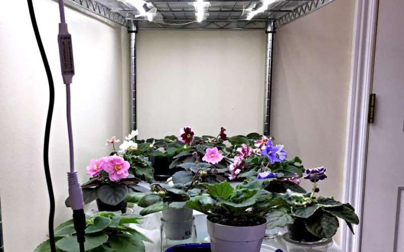 Grow Plants with LED Lights – African Violet Plant Stand
