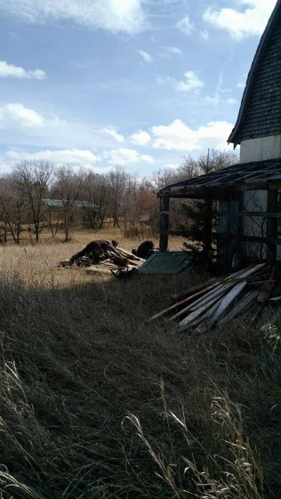 A pile of debris we pulled out what will become my horse's shed/shelter when I move them over here.