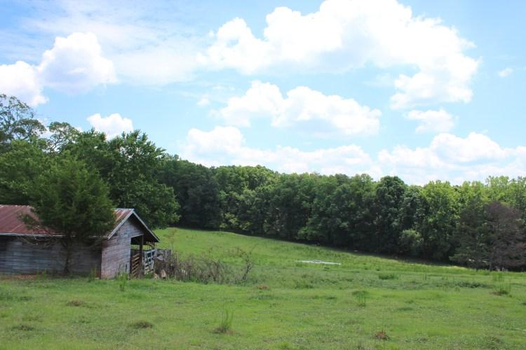pasture2