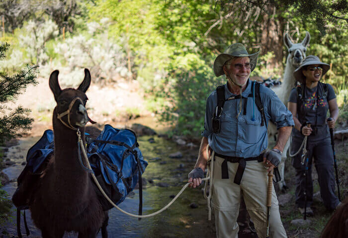 Rent pack llamas for any backcountry adventure