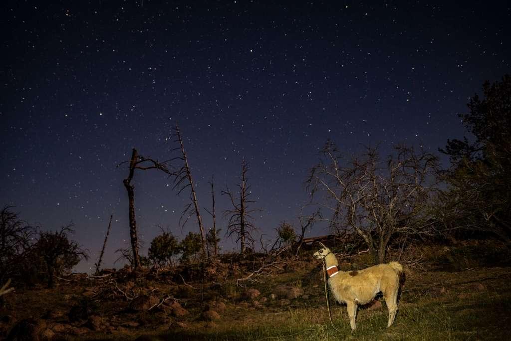 backcountry pack llama camping under the stars