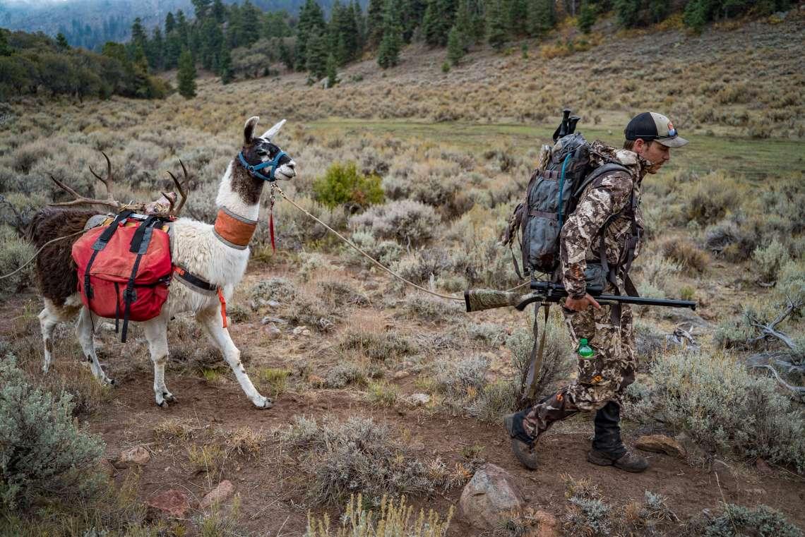 hunting with pack llamas in the backcountry mule deer utah muzzleloader