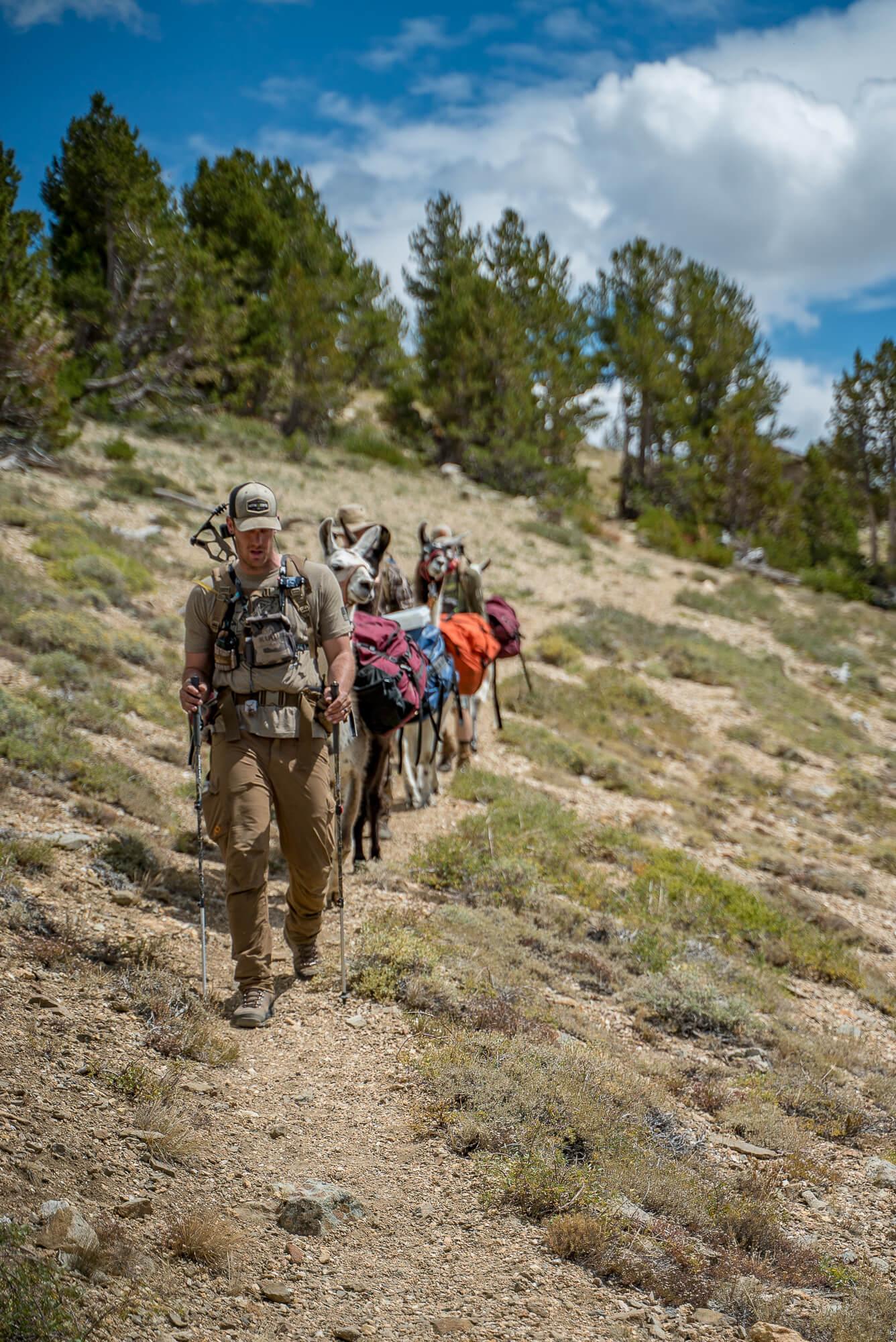 pack llama backcountry hiking ruby mountains nevada