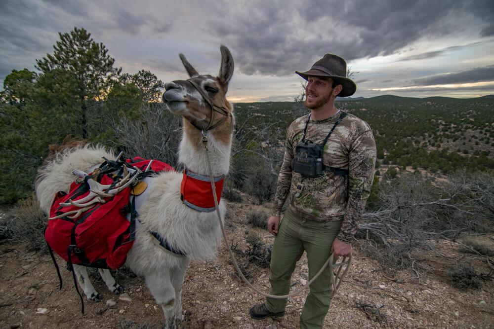 nevada pack llama hiking with llamas