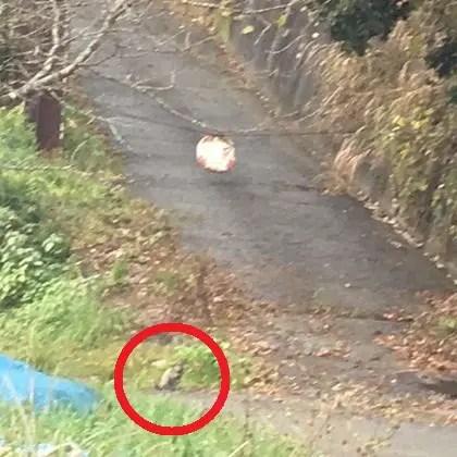 永井家付近の道路と野生動物