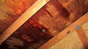 Een plafondlekkage opsporen blijkt vaak veel lastiger te zijn dan de meeste woningbezitters op voorhand denken. Een lekkage aan uw plafond kan namelijk door verschillende oorzaken zijn ontstaan. Denk bijvoorbeeld aan lekkages rond de leidingen boven uw plafond, een lekkage rond uw dakbedekking, enzovoort. Een lekkage in het plafond kan veel schade veroorzaken. Niet alleen aan het stucwerk van het plafond, maar mogelijk ook aan huisraad die onder het lek staat.