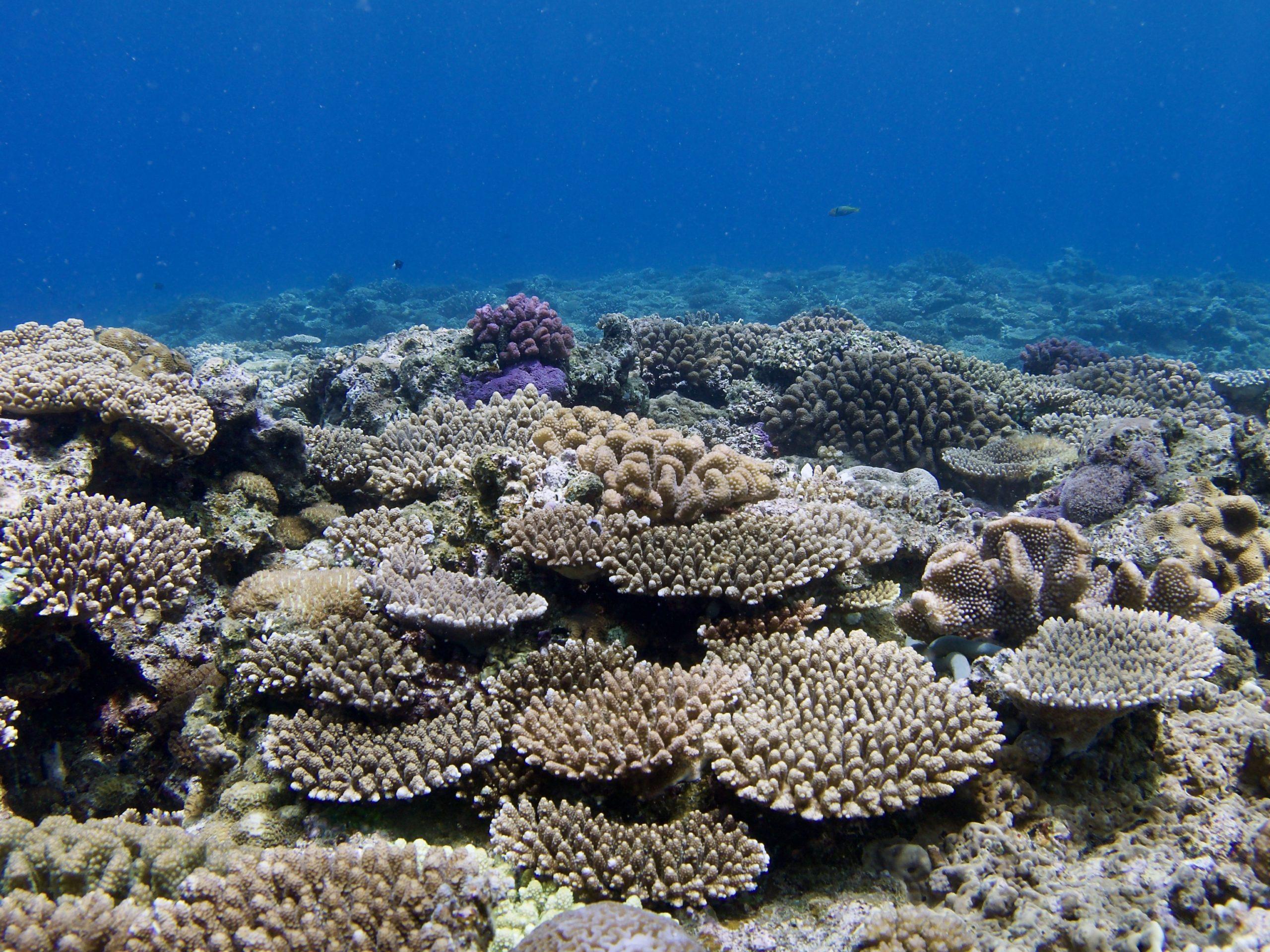 恩納村 サンゴ礁