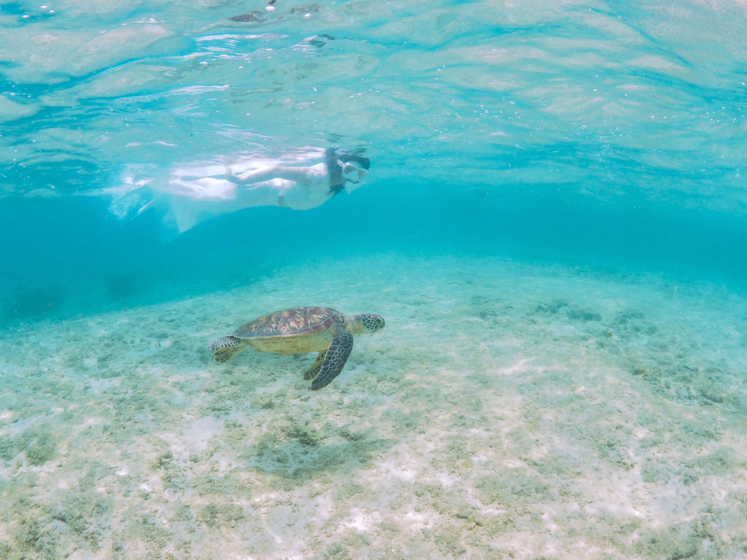沖縄旅行最終日 スキンダイビングでウミガメと泳ぐ