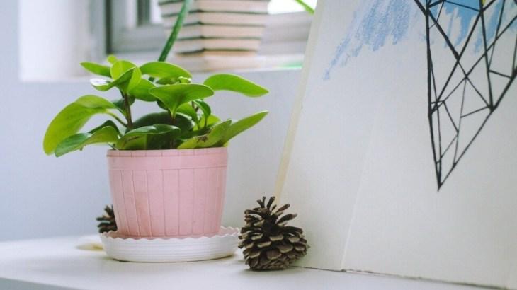 緑のある暮らしで毎日ワクワク。おすすめの植物キット8選