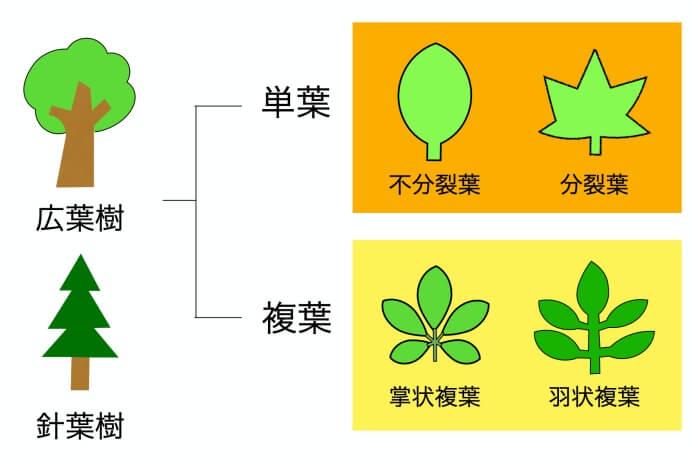 樹木の相関図