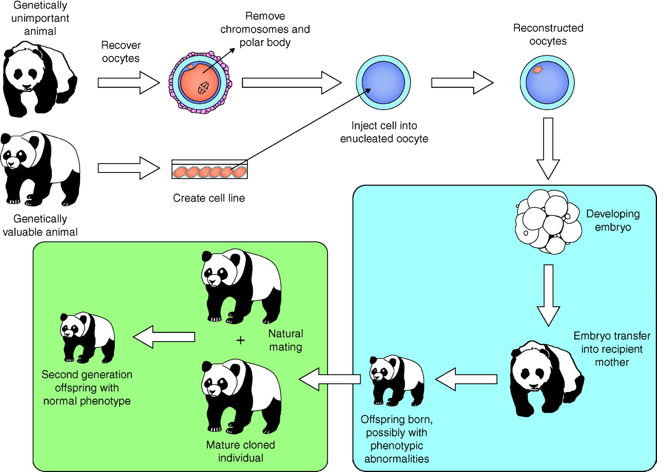 animal cloning diagram 04 dodge durango fuse wildlife conservation and reproductive reproduction
