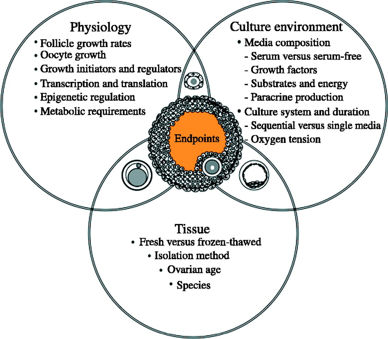 hight resolution of summary of the critical determinants of the success of in vitro growth and maturation systems for mammalian oocytes the success of the culture strategy