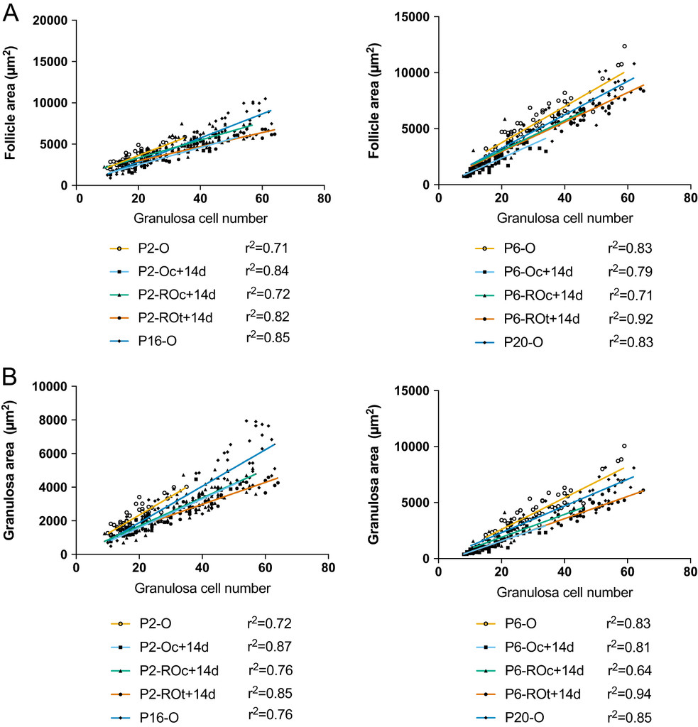 medium resolution of correlations between follicle and granulosa area to granulosa cell numbers in primary follicles from ovaries and reaggregated ovaries