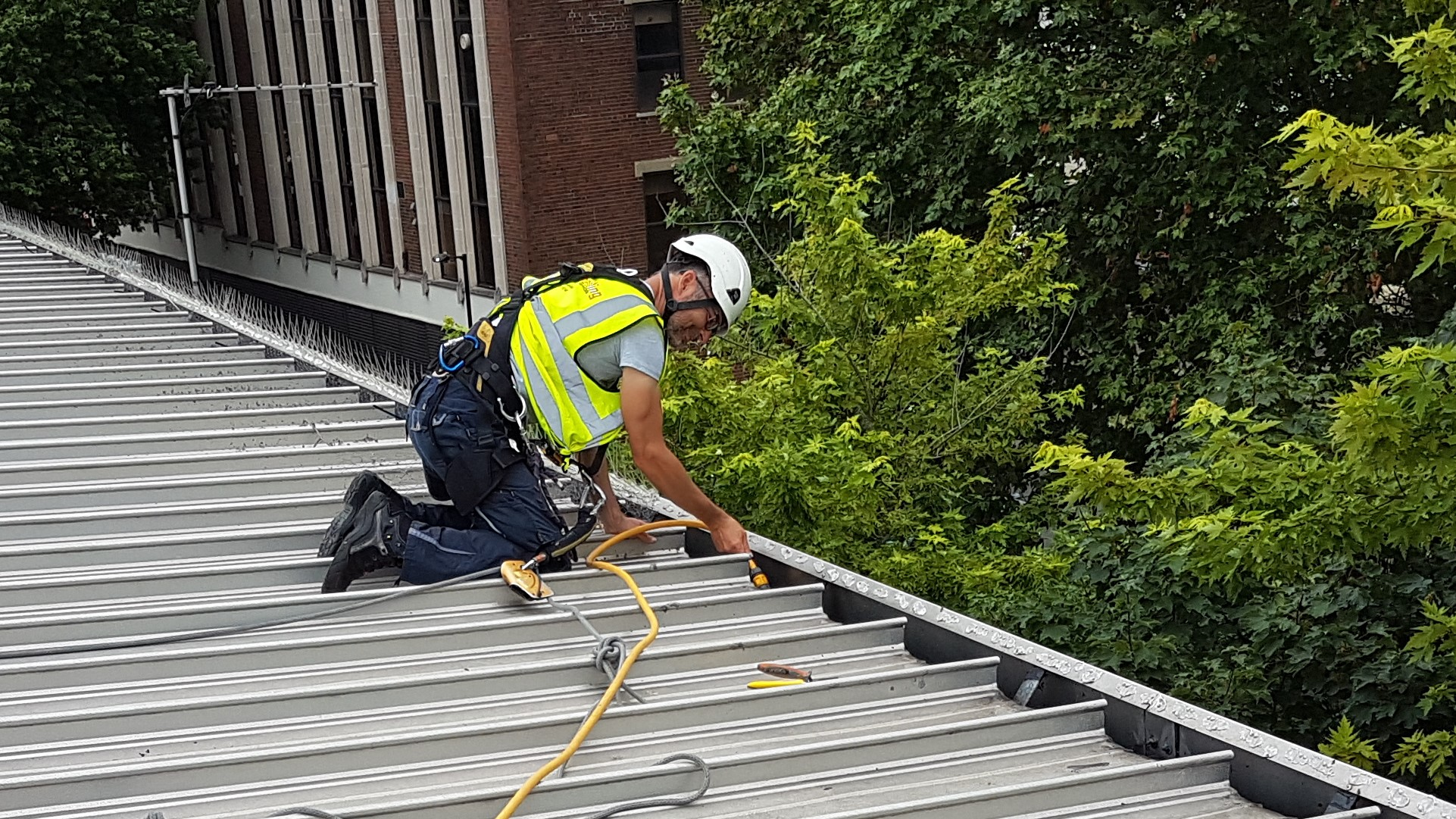 abseiling gutter cleaning