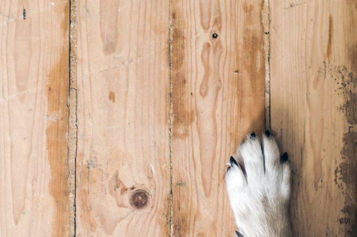 Best Hardwood Floor Finish For Dogs