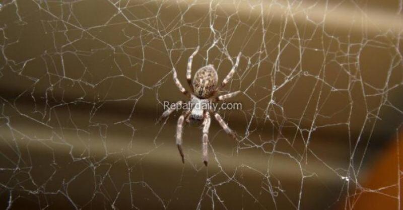pest_control_spider