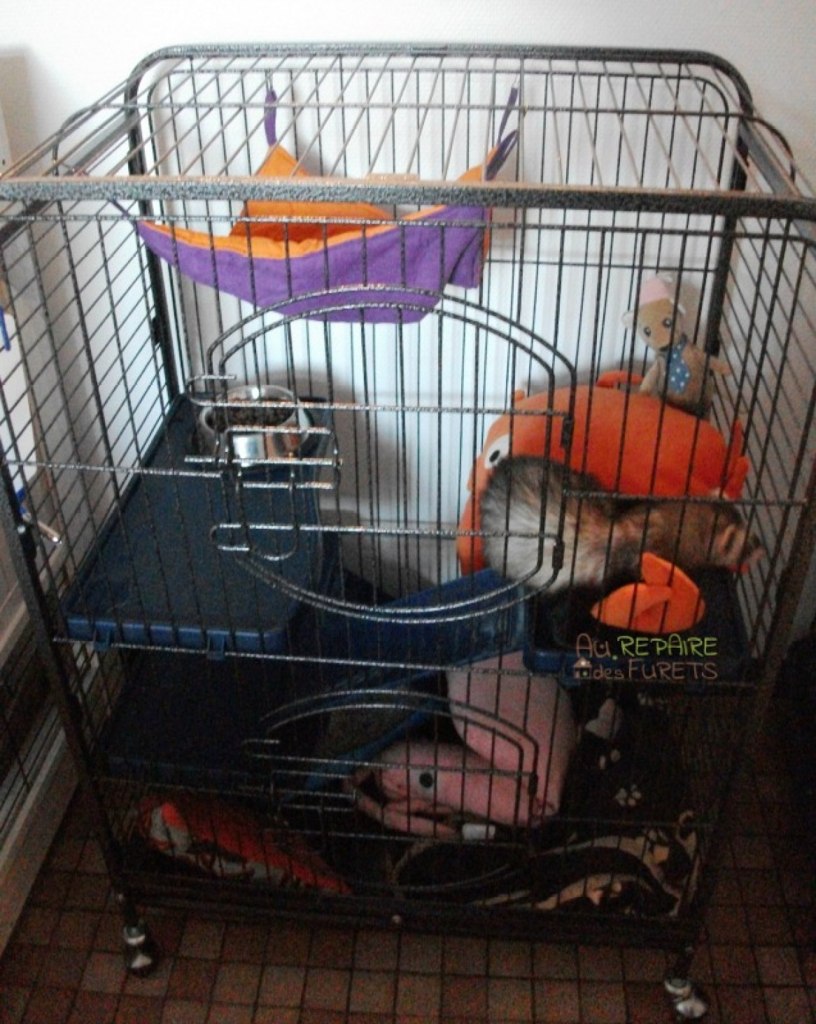 La cage id ale pour un furet au repaire des furets - Comment utiliser un furet ...