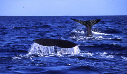 whales%204%20(m)