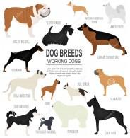 races-de-chien-ic-ne-réglée-de-observation-fonctionnante-de-chien-style-plat-71323020