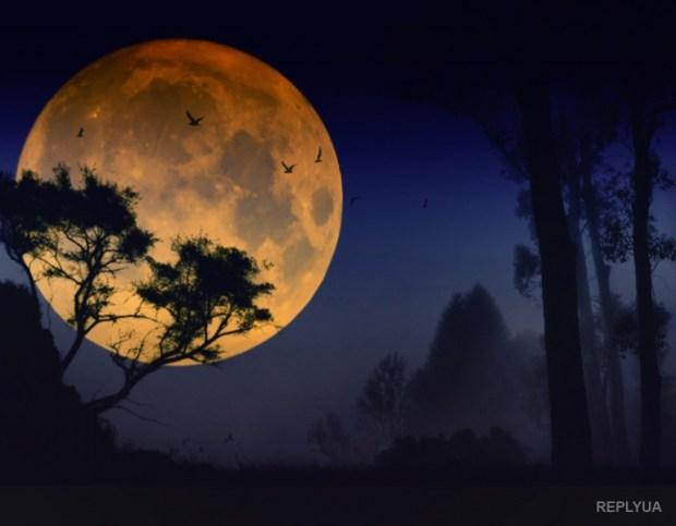 Этой ночью можно увидеть редкое явление в ночном небе