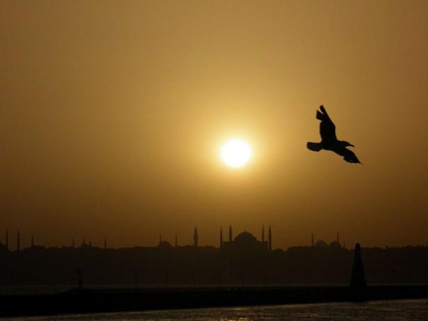 Mouette au soleil couchant, sur le Bosphore