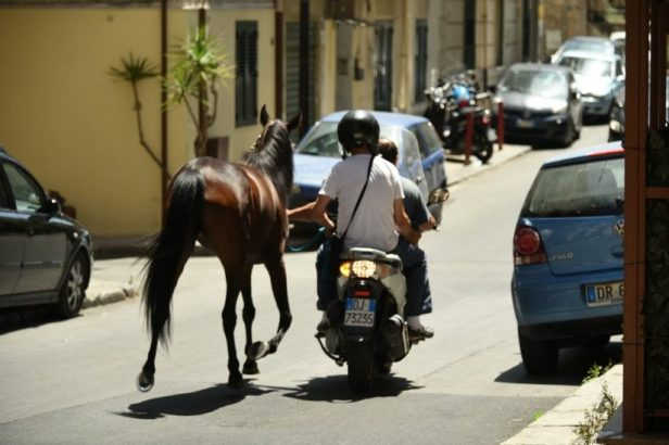 Un cheval promené par deux hommes en scooter