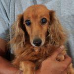犬の虐待ならないために…飼う前に考える5条件!