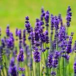 感情を伴う記憶は香りから…匂いに鈍感でも視覚よりも強い!?