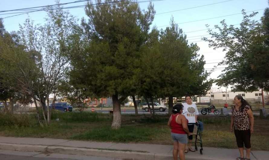 Corral: a tirar arboles, Municipio: a rescatarlos