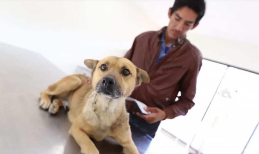 Ciudad Juárez pionero en judicializar maltrato animal