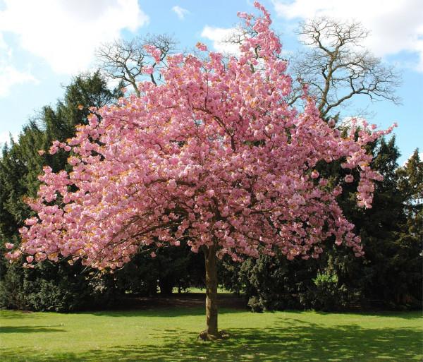 'El hueso de la cereza'