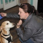 Melissa Dorrell, a volunteer with Ahimsa House, works with Boss, one of the dogs in the nonprofit's care.