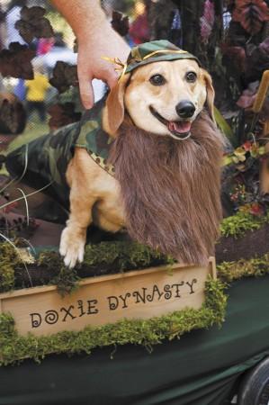 dachshund howloweenie - 0525