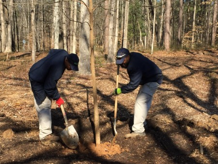 City of Dunwoody employees plant trees for Georgia Arbor Day on Feb. 20. (Special)
