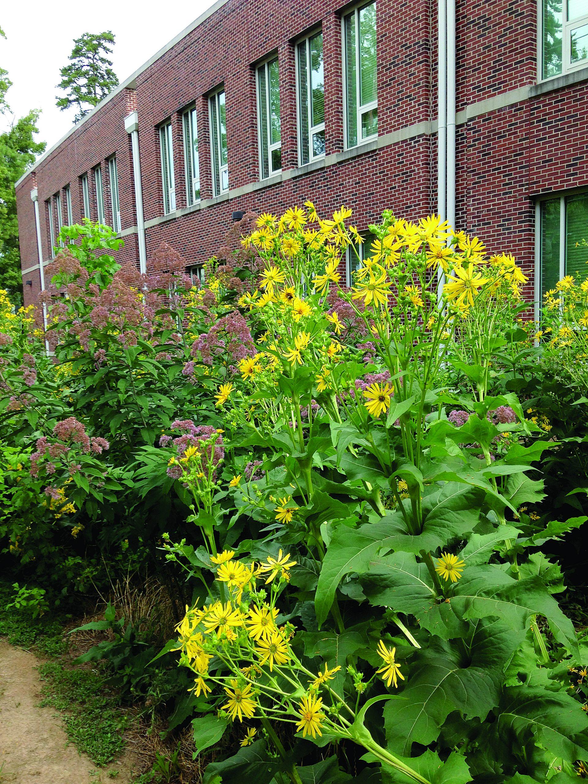 Garden tips for August