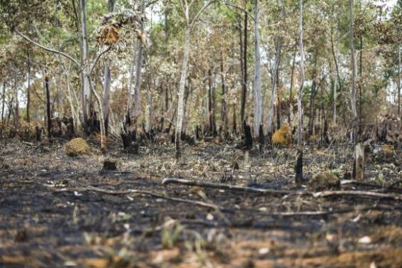 Cerrado já perdeu 46% da cobertura nativa por causa do desmatamentoMarcelo Camargo/Agência Brasil