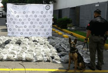 DETECTAN PERROS POLICIA 312 KILOS DE MARIHUANA EN GUADALAJARA