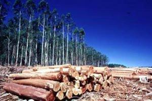 tala-bosques-2.jpg